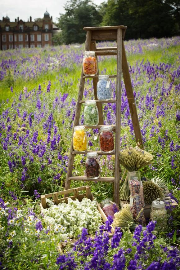 ShropshirePetals.com Confetti Colour Ladder in Confetti Field £11.50 per litre