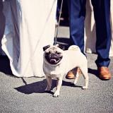 A Green & Gold Wedding at The Villa (c) Teresa C Photography (32)