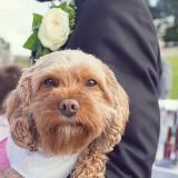 a-pretty-countryside-wedding-c-darren-mack-photography-35