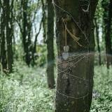 fiesta-wedding-in-the-woods-c-fox-owl-79