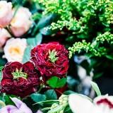 Fantail Designer Florist (c) Stu Ganderton (5)