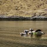 An Isle Of Skye Elopement Wedding - John Barwood Photography (32)