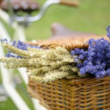 ShropshirePetals.com Vintage Bike Lavender and Wheat Bunches from £5 (4)