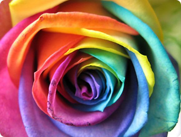 Brides Up North UK Wedding Blog: Rainbow Roses